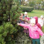 Dzieci pokazują drzewa iglaste