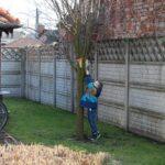 chłopiec sięga koszyk umieszczony na drzewie
