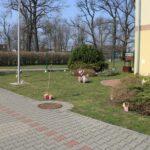 pochowanie koszyczki na dworze przed przedszkolem