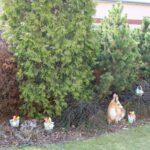 ukryte koszyczki w krzewach