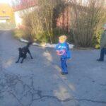 Chłopcy grają w ringo, na zdjęciu widoczny pies