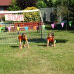 dzieci przygotowane do biegu