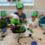 Tulipanki sadzą rośliny